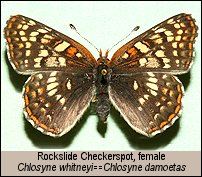 click for larger photos of specimen
