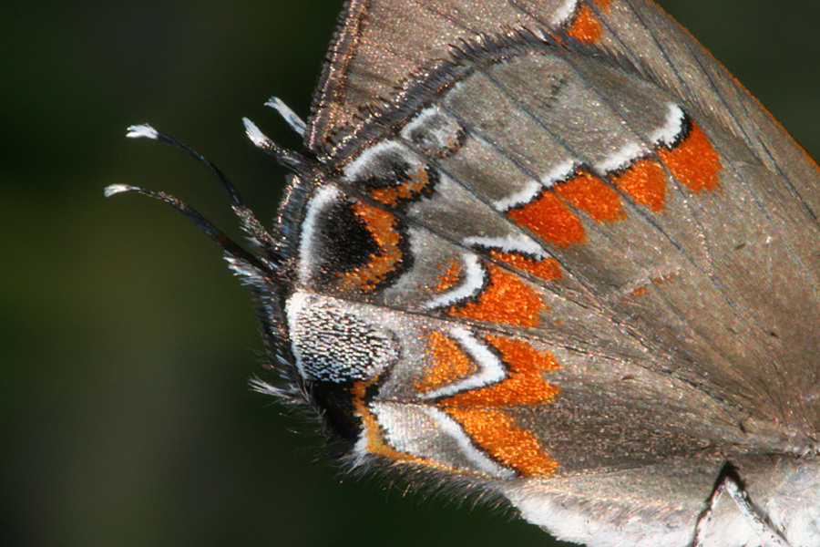 close up of wing pattern
