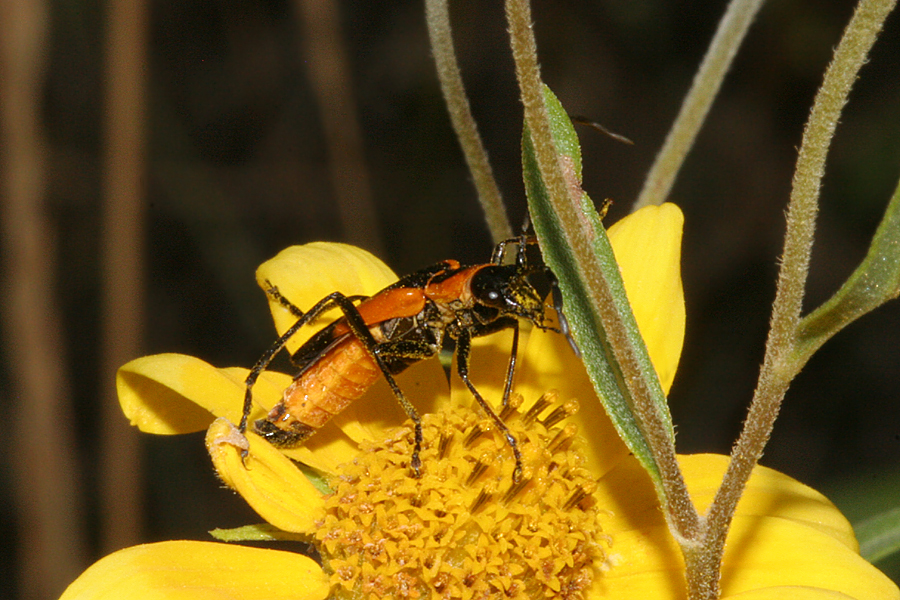 U N Insects WILD UTAH Photos of Ch...