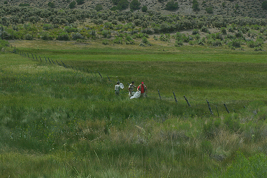 Nicky Davis, Dale Nielson, Todd Stout butterflying at a meadow near Koosharem, Utah