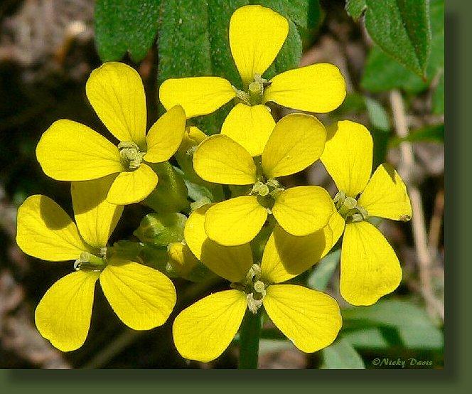 Wild Utah Photos Of Yellow Wildflowers Photos Of Western
