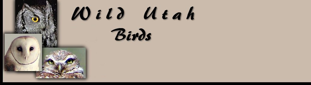 Title Birds for Wild Utah